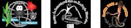 VII Congreso Nacional de Arqueometría – CNA 2018